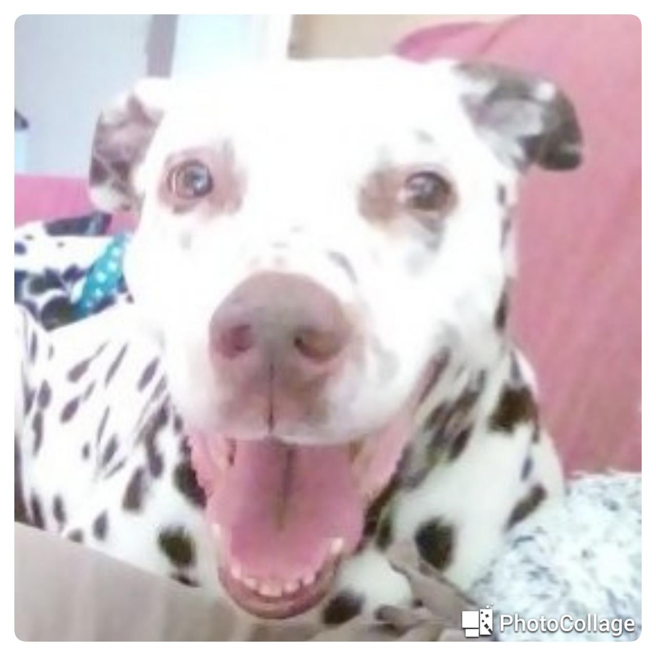 https://www.centrale-canine.fr/lofselect/chien-ws/4074536